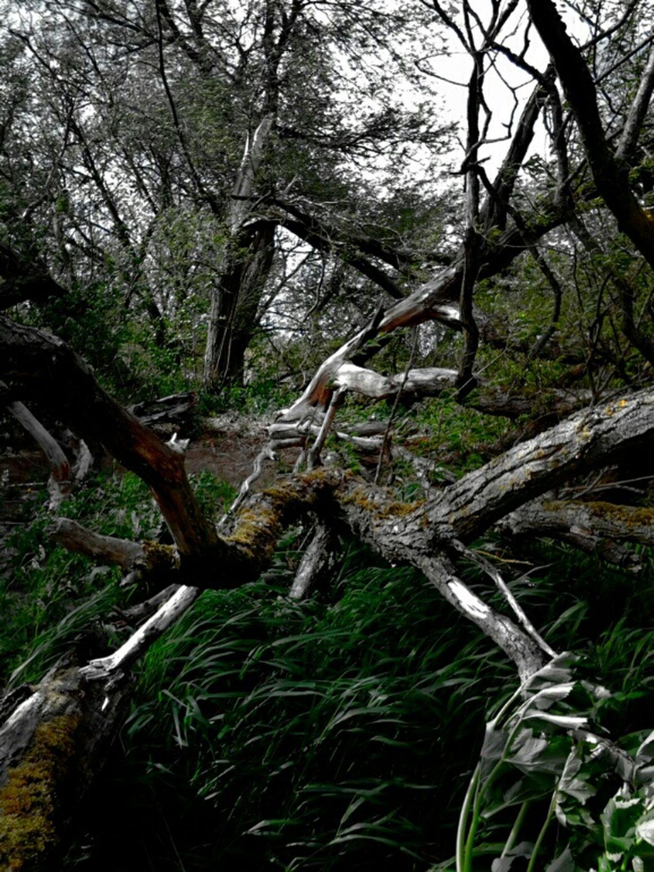 Deadwood  Jungle Trip