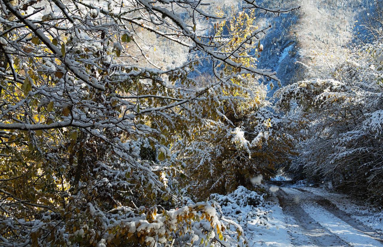 Snowy Backroads Backgrounds Backroads Beauty In Nature Bolu..TURKEY Branch Cold Temperature Icy Leaves Mountains Nature Outdoors Roads Roadscenes Sky Tree Treescape Winter Winter Wonderland Wintertime