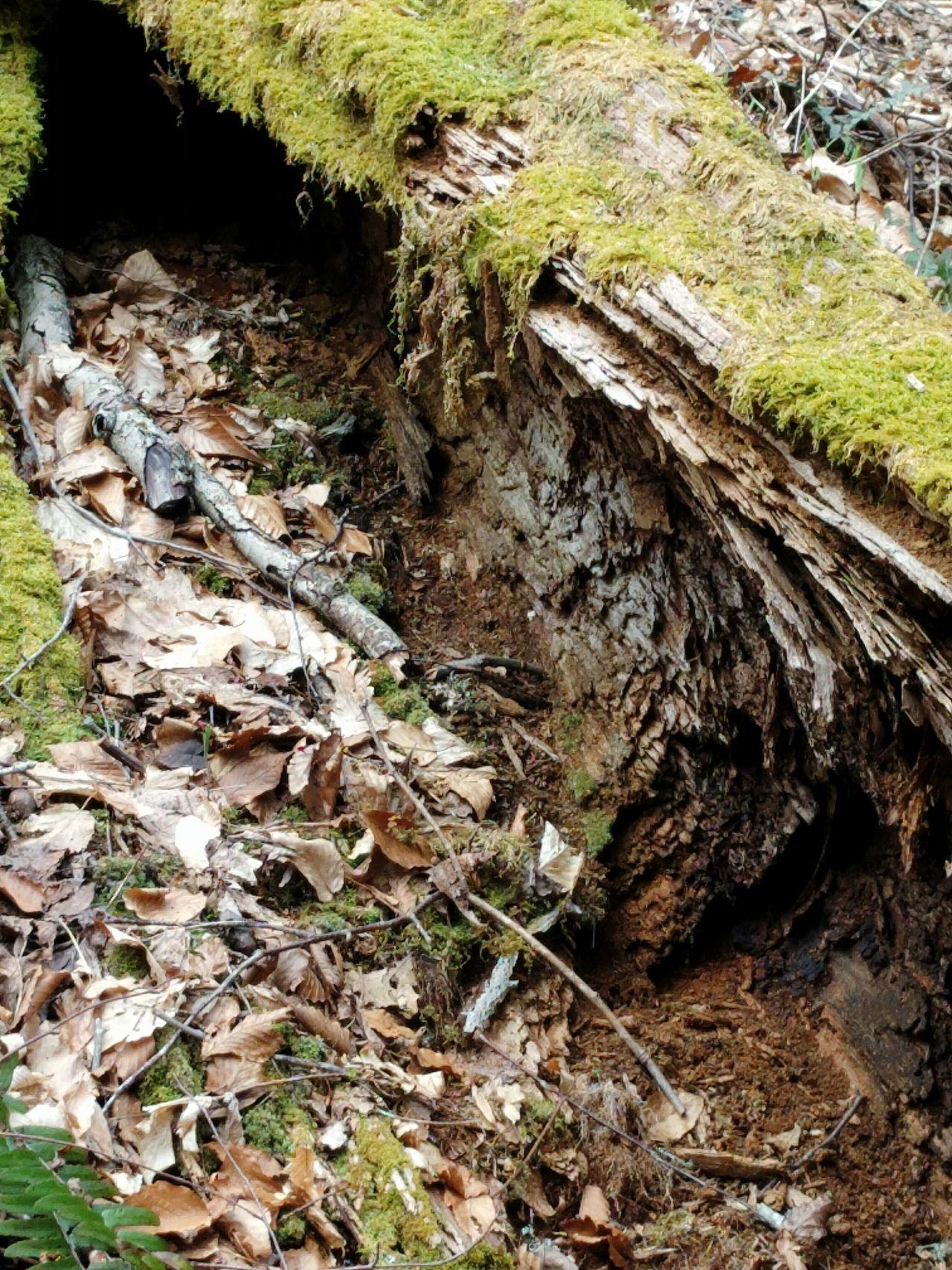 Hiking Forest Forestwalk Deadwood  Woods