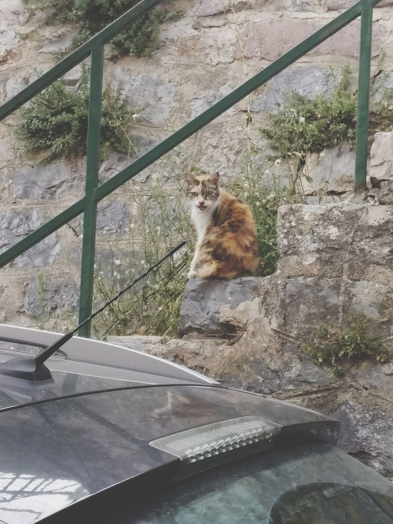 Cat 🐱 Mammal One Animal Animal Themes Day Domestic Cat No People Sitting Outdoors Domestic Animals Feline Animals In The Wild Pets Nature Retaining Wall Beauty In Nature Summer Travel Destinations Light Freshness