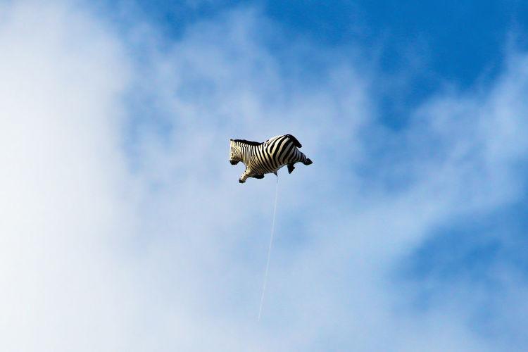 Lost Zebra 2 Animal Wildlife Animals In The Wild Balloon Baloon Zebra Blue Sky Children Children Playing Cloud - Sky Clouds Day Fairytale  Fantasy Flying Flying High High Lost Lost Zebra Outdoors Sky Story Storytelling Striped Up Zebra Zebra Crossing