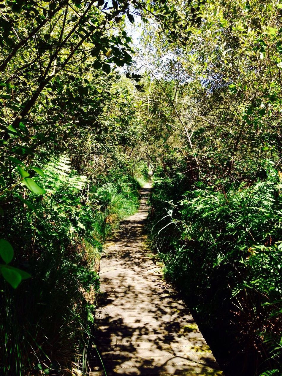 The Way Forward Green Color Nature Beauty In Nature Tranquility