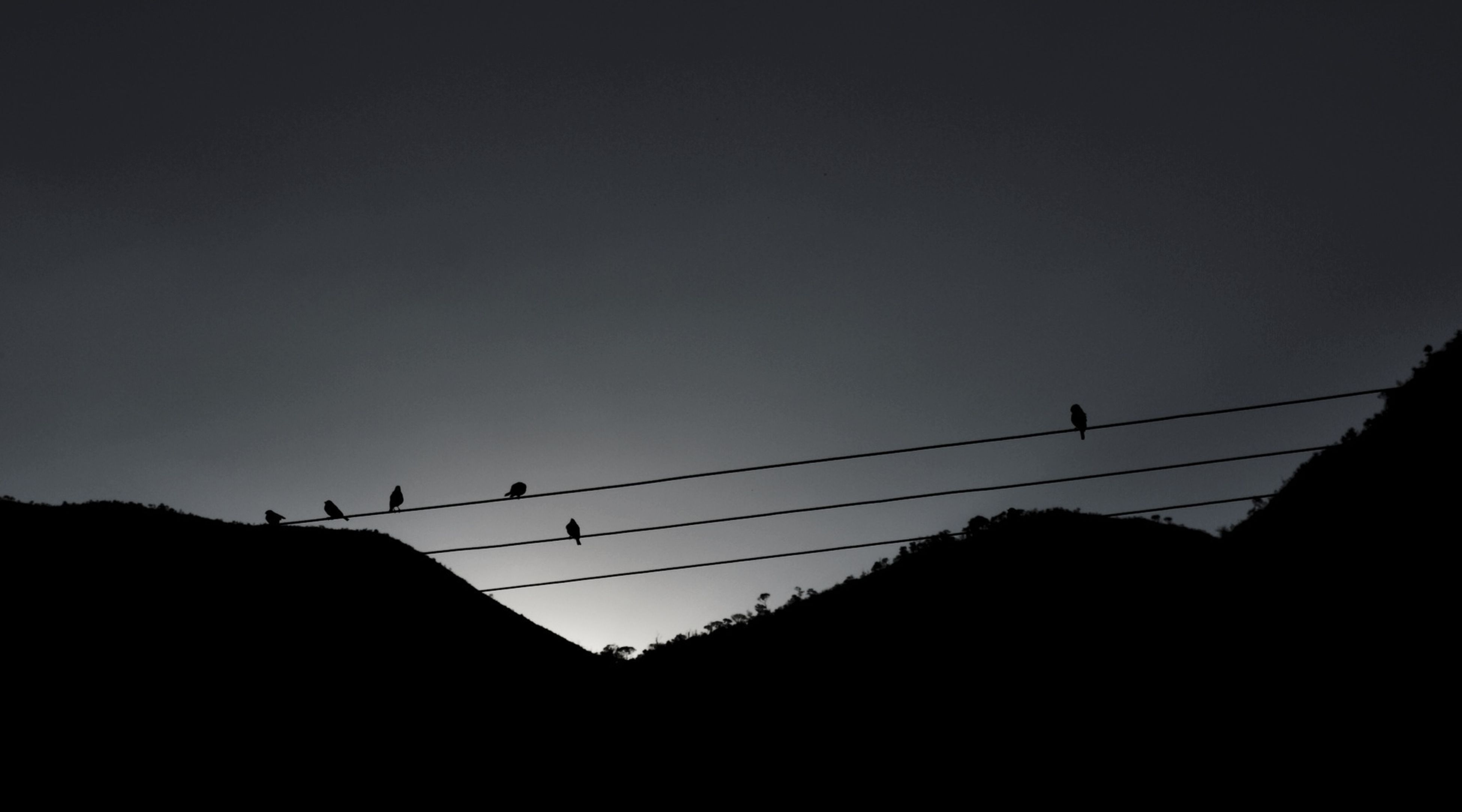bird, animal themes, silhouette, animals in the wild, low angle view, wildlife, flying, clear sky, power line, copy space, perching, flock of birds, connection, sunset, sky, cable, dusk, nature, electricity pylon