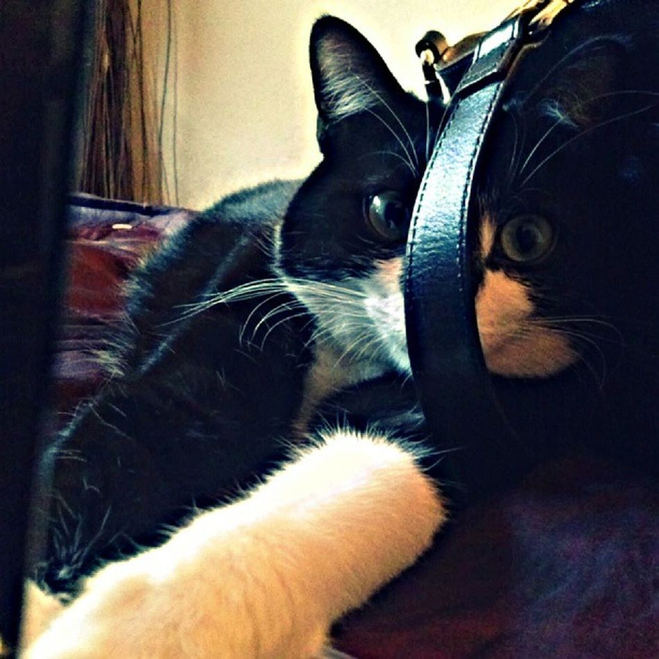 Does this creep you out as much as it does me? Kitty Hanniballecter Instagramcat Mycatiswierd meow tuxedocats
