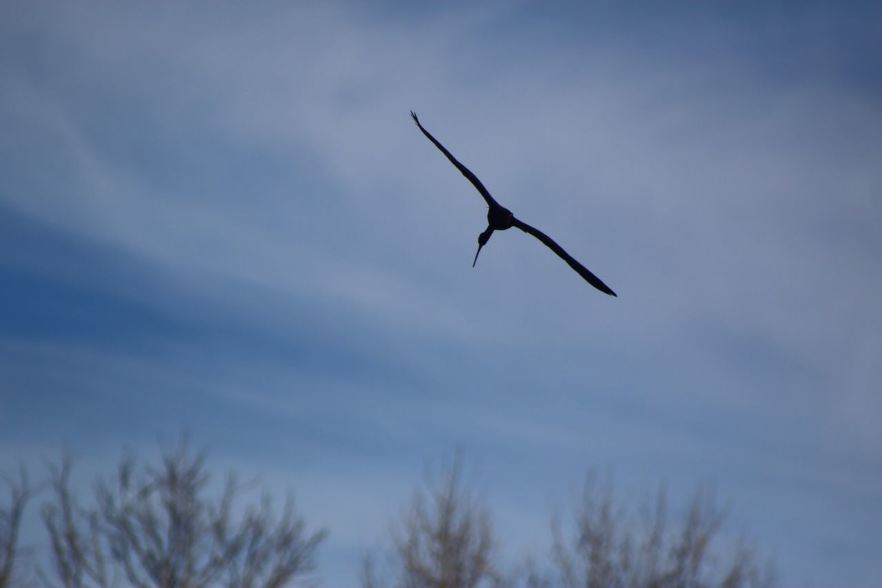 Flight Bird Depth Of Field Nature Sky Blue Vuelo Pajaro ProfundidadDeCampo Naturaleza Cielo Azul Flug Vogel Umwelt Natur Himmel Blau Voo Passaro Natureza Céu Azul Long Goodbye