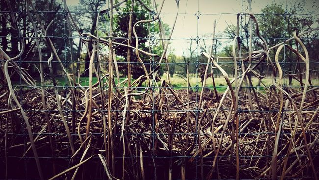 Wire Fence Fence Squares Beauty Of Decay Dead Plants Out For A Walk Woven