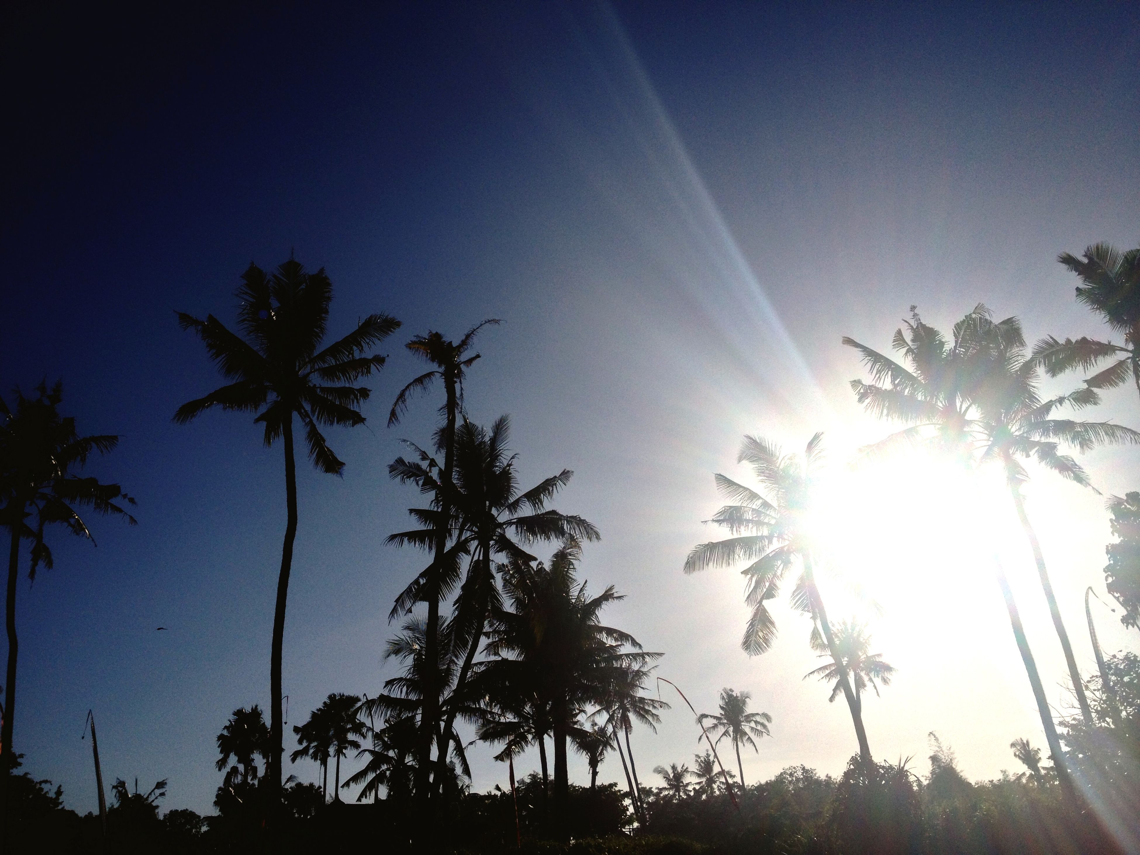 sun, sunbeam, tree, low angle view, sunlight, lens flare, palm tree, clear sky, bright, growth, sunny, sky, nature, beauty in nature, blue, silhouette, tranquility, back lit, scenics, no people