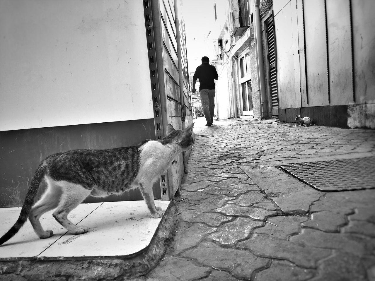 Monochrome Photography Cat