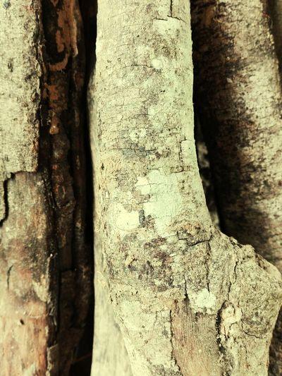Old wood Textured  First Eyeem Photo