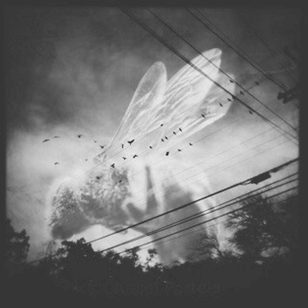Birds Bees Bijoucep Sky Blackandwhite Noir Et Blanc Fragility Wings Nature