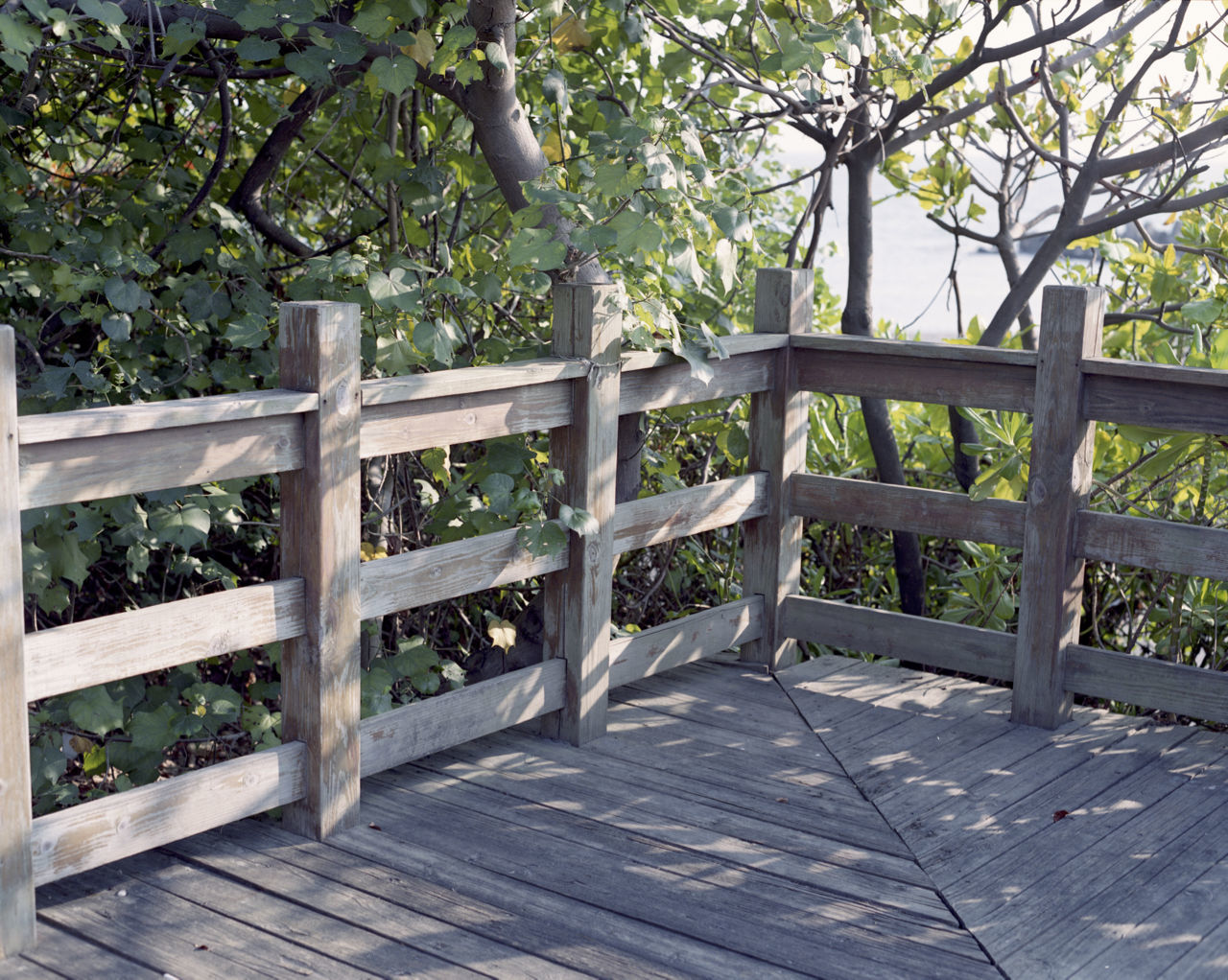 Day Nature No People Outdoors Railing Sunlight Tranquility Tree Wood - Material