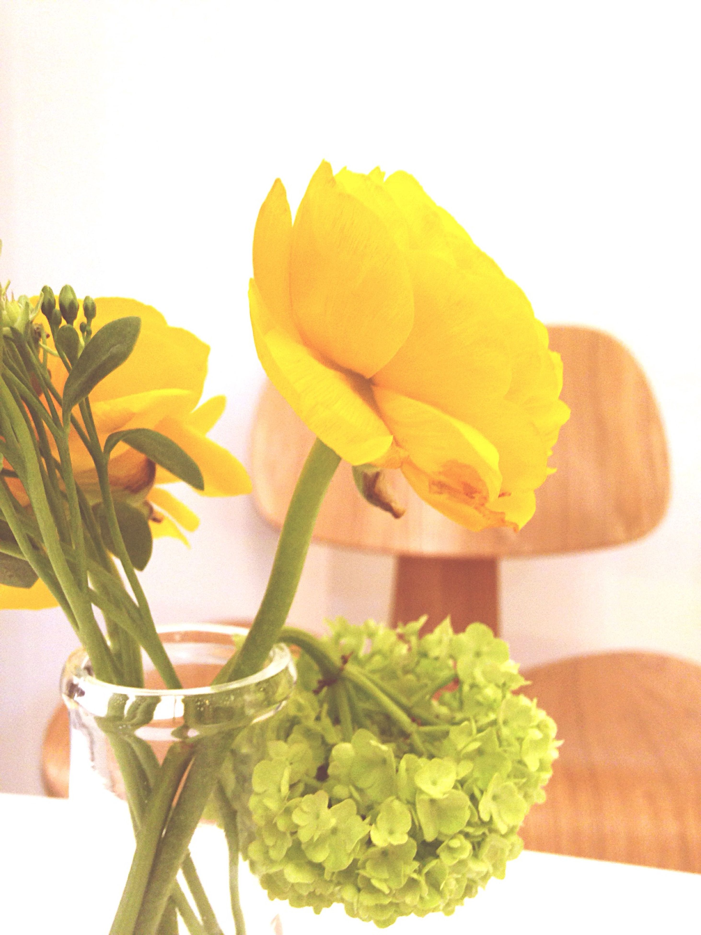 flower, freshness, yellow, indoors, fragility, leaf, petal, table, vase, close-up, plant, white background, flower head, stem, beauty in nature, growth, nature, potted plant, studio shot, rose - flower