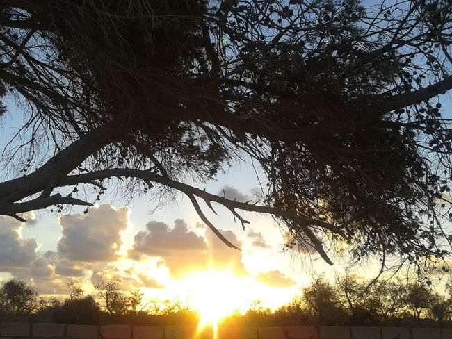 صباحكم سعيييييد إن شاء الله :)) Sun_collection Tree_collection  Clouds And Sky in Azzawya #Libya