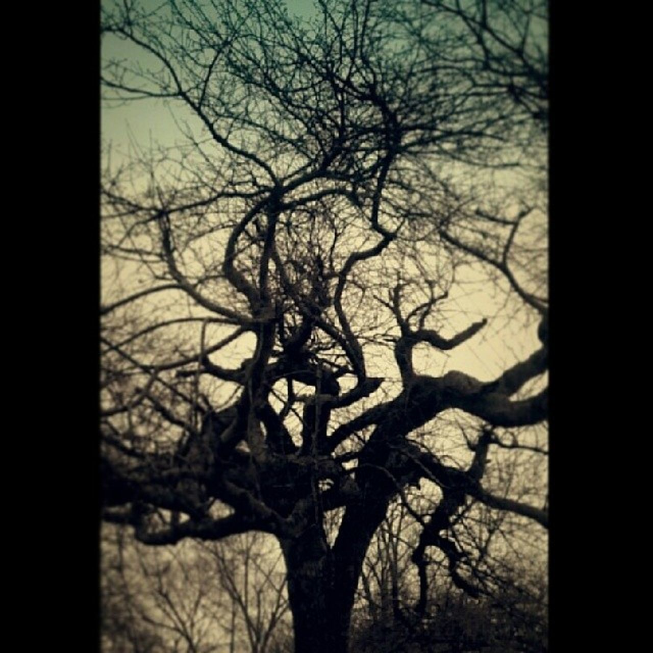 bare tree, tree, branch, tree trunk, silhouette, no people, outdoors, nature, day, lone, sky, beauty in nature, dead tree, close-up