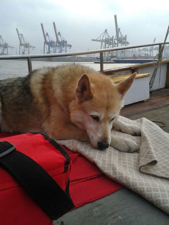 Everyday Joy Sailing Dog Live Harmonie Clouds And Sky Elbe I Hate Hash Tags