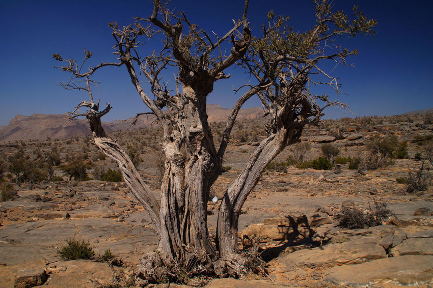 Arid Arid Climate Arid Landscape Enjoying Life Eye4photography  EyeEm EyeEm Best Shots EyeEm Nature Lover EyeEmBestPics Nature Nature Photography Nature_collection Ph Photo Photographer Photography Photooftheday Rock Rock Formation Rocks Sky Sky_collection Skyporn Tree Trees