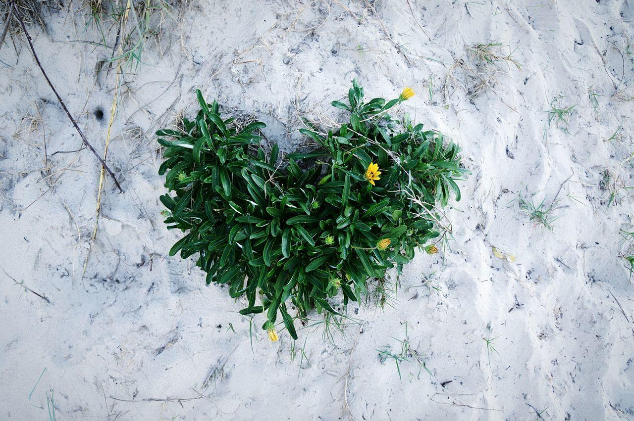 Beautiful stock photos of heart, Australia, Botany, Bud, Day
