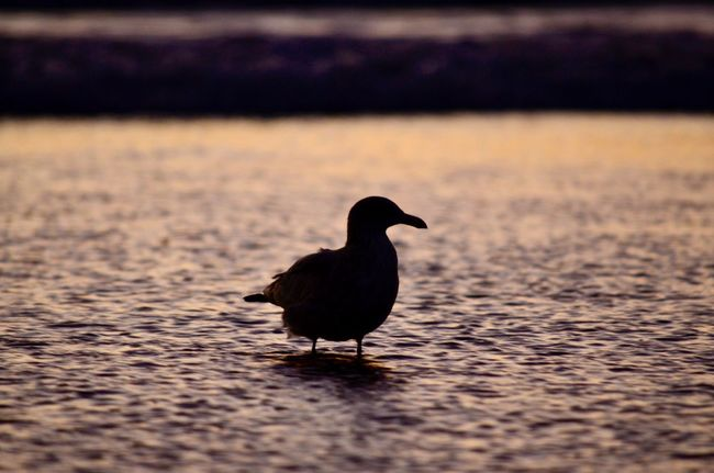 Unedited Bird Water Beauty In Nature Nature Outdoors California No People Eye4photography  EyeEm Gallery Ripples