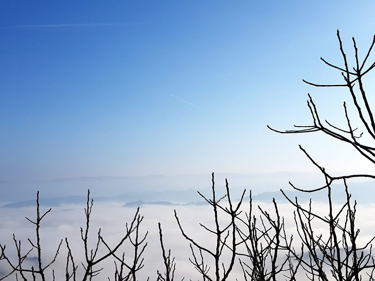 Nature Blue Sky Beauty In Nature Landscape No People Outdoors Clear Sky Plant Tree Scenics Day Nature Reserve Langhe La Morra Autumn Piedmont Trees In The Fog Texture And Surfaces Cloud - Sky Foggy Weather Fog Leaves And Sky Foggy Day Tranquility EyeEmNewHere