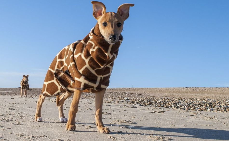 Beautiful stock photos of welpen,  Animal Themes,  Arid Climate,  Clear Sky,  Day