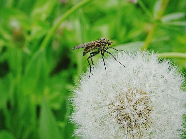 Hello World Insetti Insetti 😨 EyeEm Nature Lover Natura Taking Photos Insect Asiago Insetti Eyeem