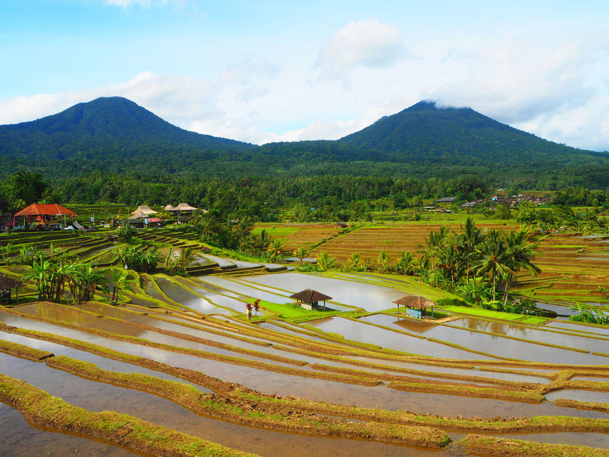 💚🌾 Rice Paddy 🌾💚 Travel Jatiluwih Bali Bali, Indonesia Beauty In Nature Agriculture Still Life Greenery Exceptional Photographs Green Color Growth Flying High Landscapes Mountain Mountain Range Nature Outdoors Rural Scene Scenics Sky Tadaa Community Terraced Field Tranquility Travel Destinations