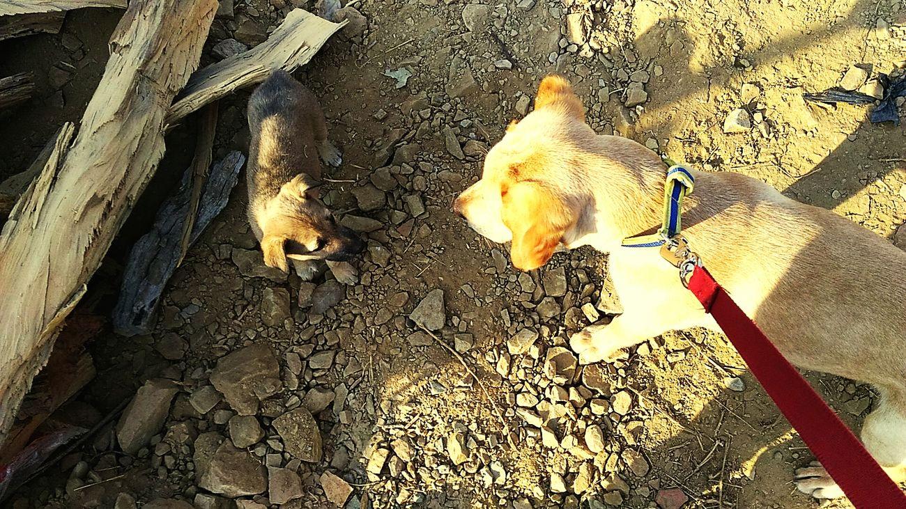 Two puppy Dog Mammal Nio