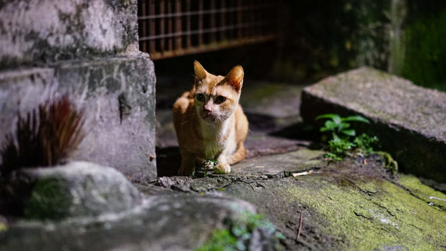 Street Photography Street Fashion SONY A7ii Streetphotography City Street Street Quite Place China Zhuhai Zhuhaicity Night Nightphotography Night Lights Cat Pet Cat♡ Light And Shadow Dirty Dirtystreets