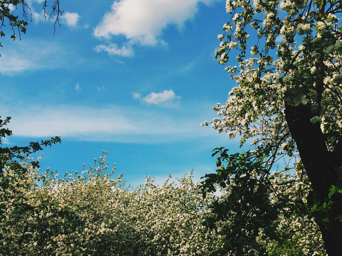 Secret Garden Walking Around Traveling Flowers Enjoying The Sun Sky Collection Blue Sky Moscow Park Relaxing