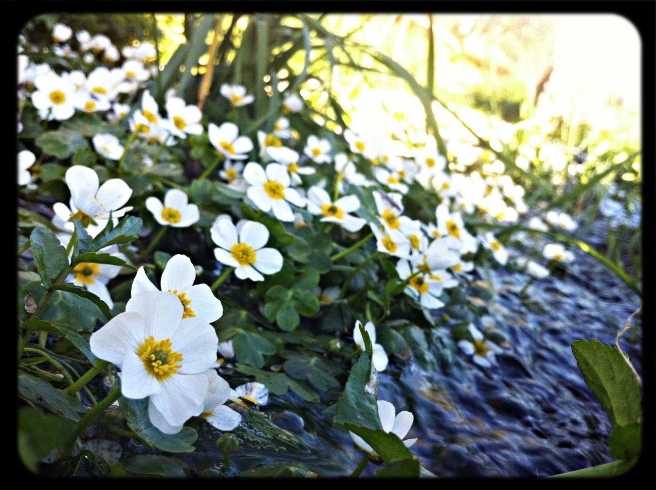 Flowers Spring Stream VivirExtremadura
