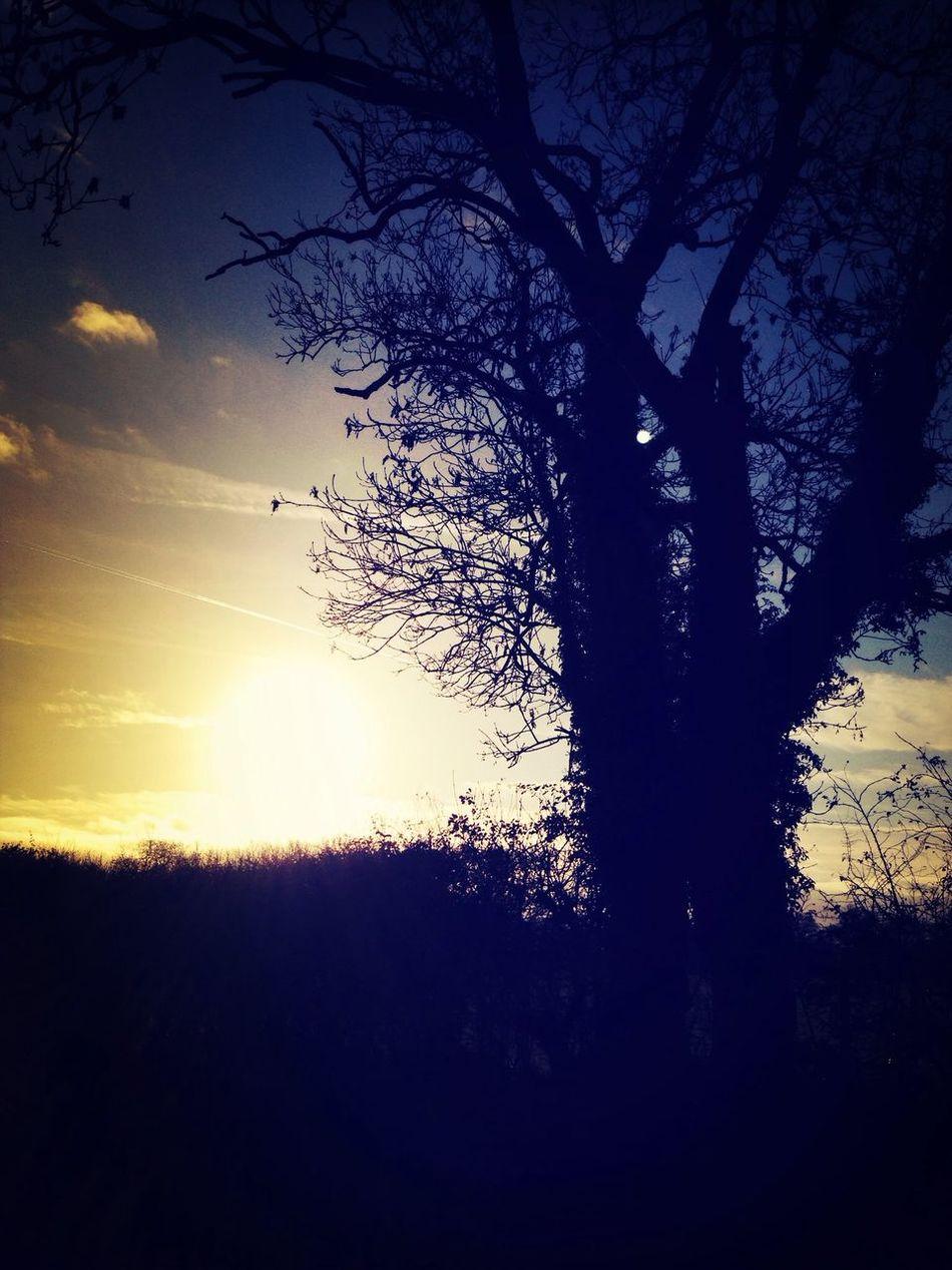 Walking Around Hugging A Tree Taking Photos