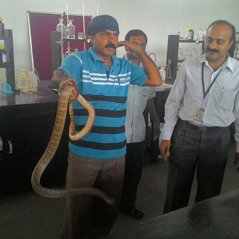 Lmfao again Collegeandsnakes Girlscolleges Gsss Snakediaries Kingcobra Mysore 👌👆😹