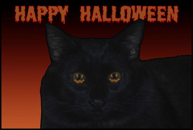 Art Black Cat Cat Happy Halloween Jack O'Lantern No People Orange Color Photo Art Scary Spooky Halloween