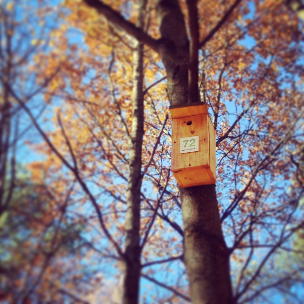 Tree Low Angle View Nature No People Tree Trunk Outdoors Autumn Branch Growth Day Beauty In Nature Sky Birdhouse Home Number Numbers Forest Park Vilnius Fall Waiting House Birdhouses Fall Beauty Fall Colors