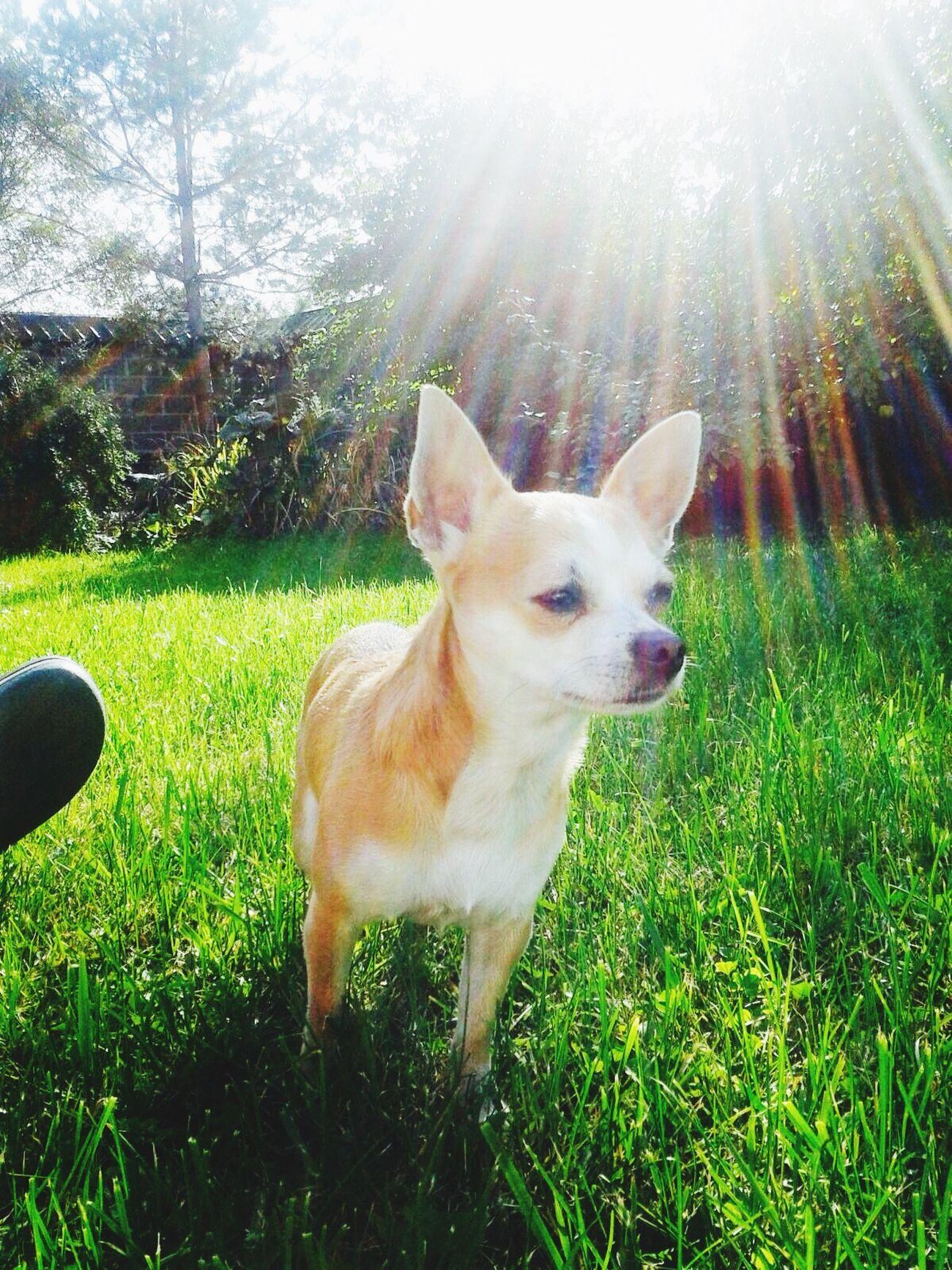 Dogs 🐩 Hello World