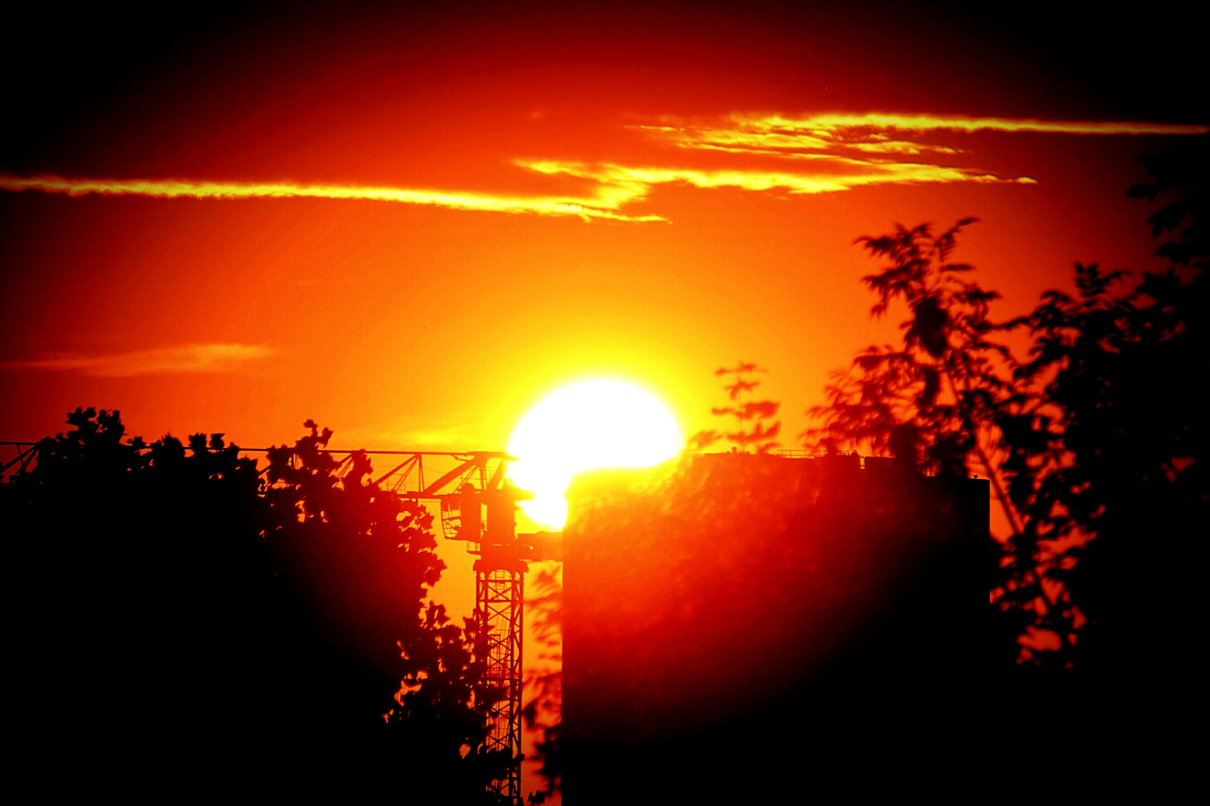 sunset, sun, orange color, silhouette, tree, sunlight, nature, no people, beauty in nature, outdoors, sky, scenics, tranquility, growth, close-up, day