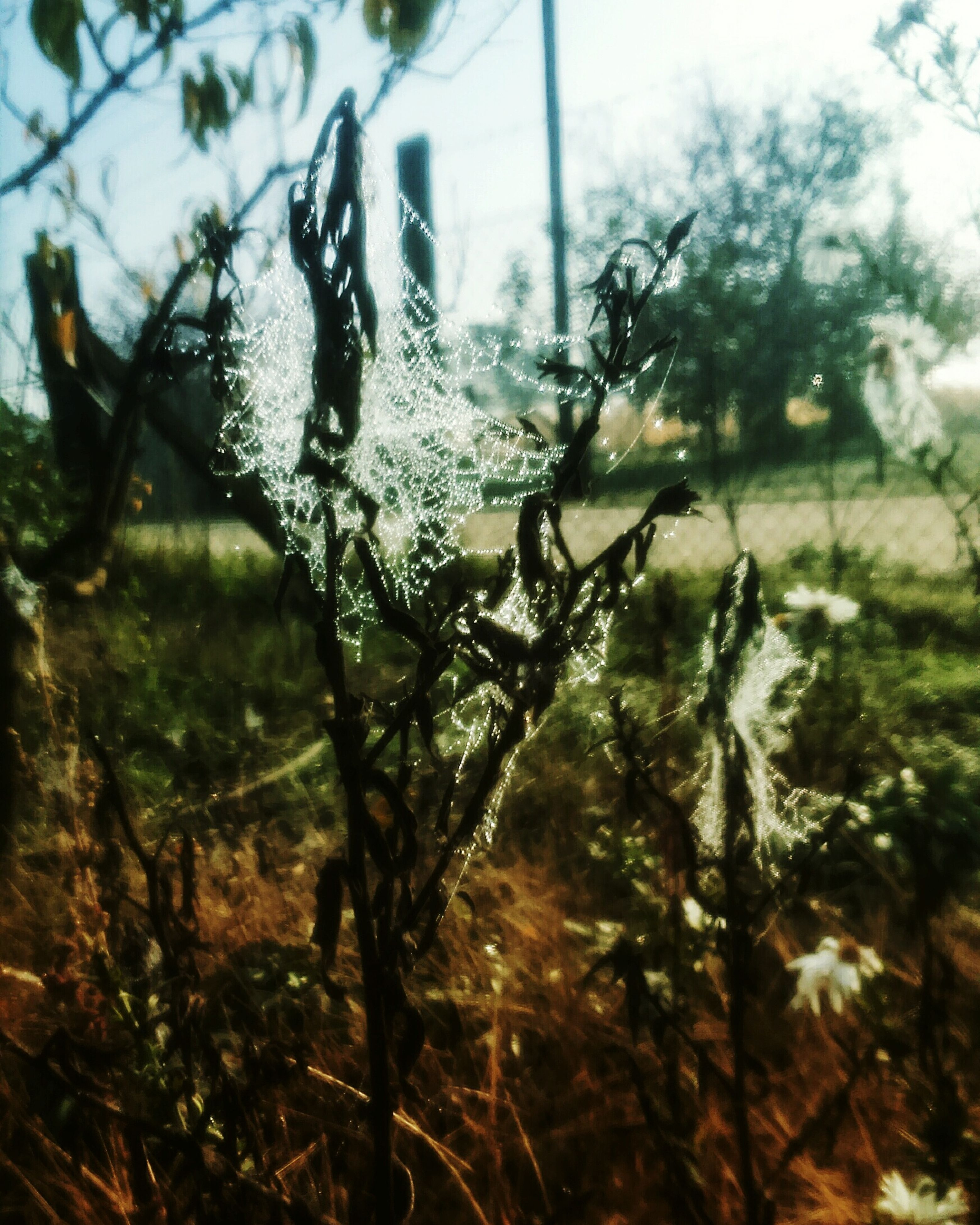 water, tree, focus on foreground, wet, growth, drop, nature, close-up, sunlight, rain, plant, grass, tranquility, day, selective focus, transparent, reflection, window, outdoors, no people