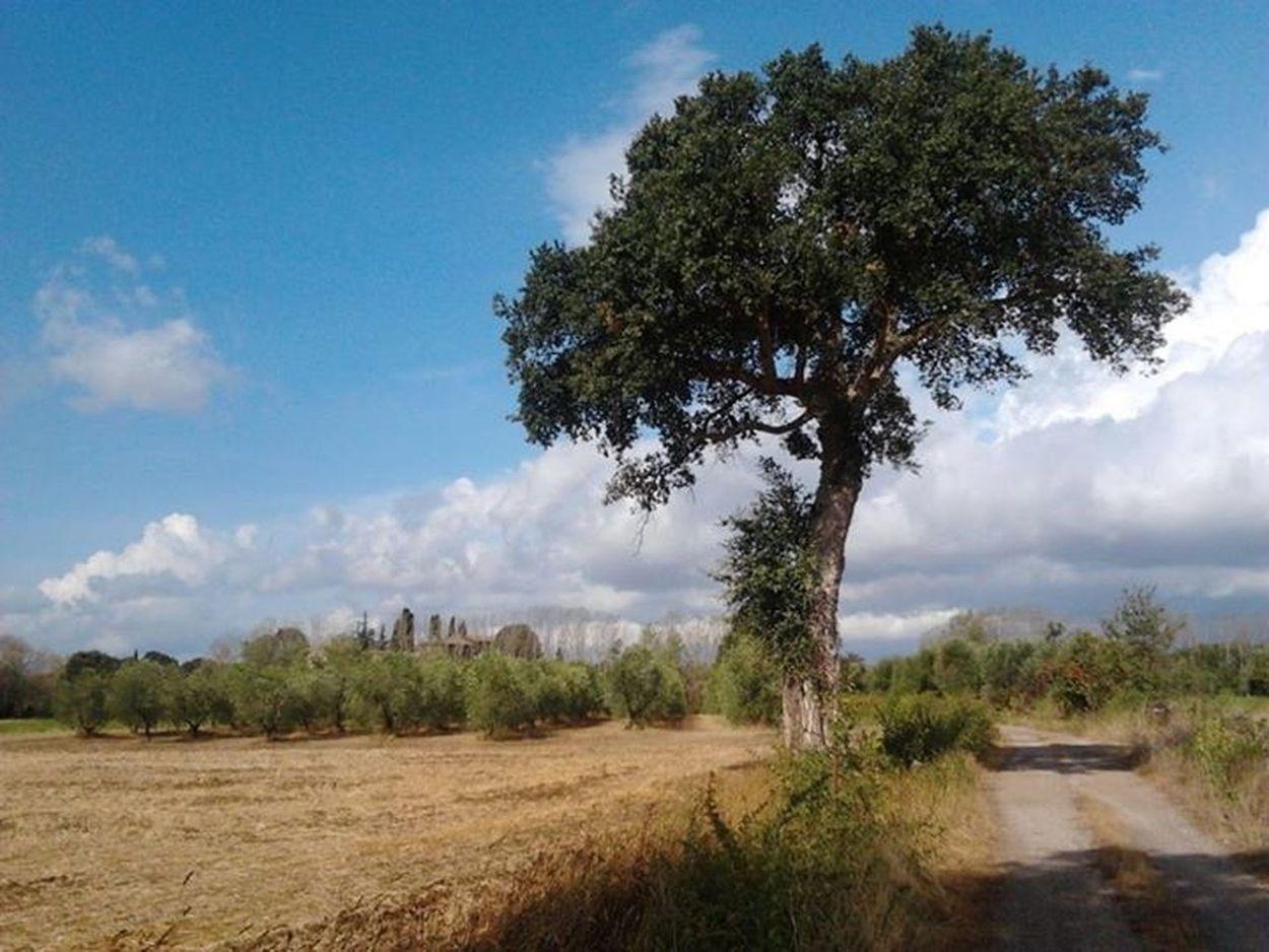 Tuscany Nature Natural Landscapes Hamlet of Porcareccia