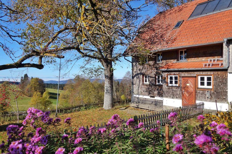 Hof im Schwarzwald Flower Building Exterior Built Structure Architecture Nature Tree Cottage Beauty In Nature Tranquility Schwarzwald Autumn Colors Bauernhof Bauernhaus