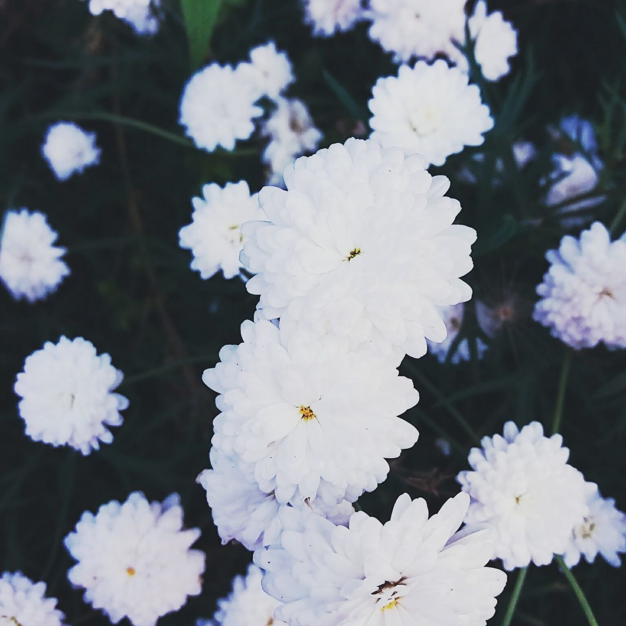 Artistic Beauty In Nature Close-up Flower Flowers Fragility Nature No People Outdoors White Color Winter