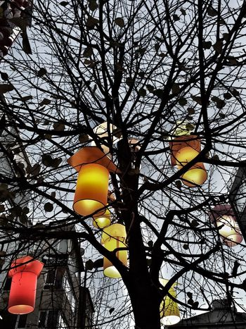 Sky Background Street Backgrounds Yellow Red Candle Decorated Light Hanged Colorful Colors Decoration Outdoors Tree Trees