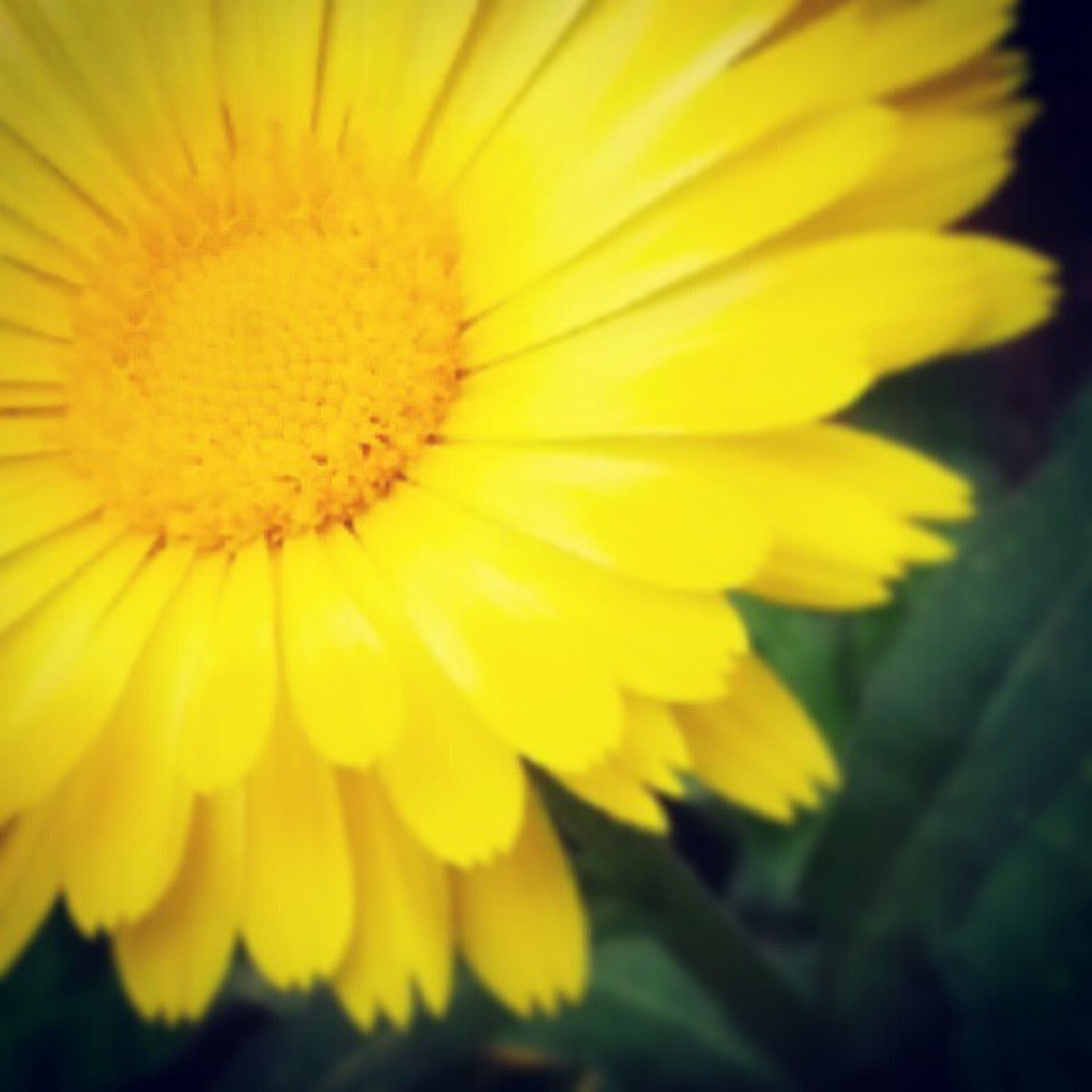flower, petal, yellow, freshness, flower head, fragility, beauty in nature, close-up, growth, pollen, blooming, nature, single flower, focus on foreground, in bloom, plant, selective focus, outdoors, no people, blossom
