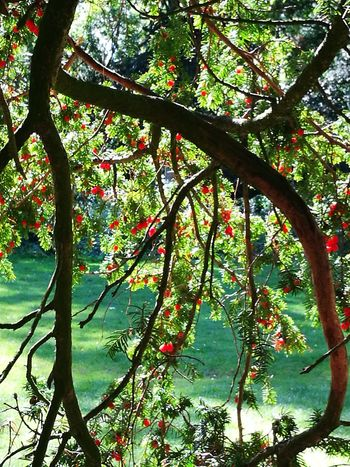 Tree Branch Nature Growth Beauty In Nature Outdoors Day No People Low Angle View Tranquility Scenics Flower Freshness