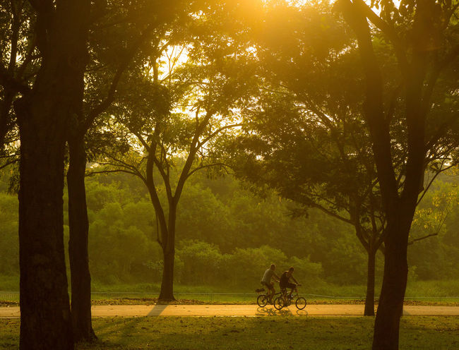 Buddies on bicycles at Bedok Reservoir in Singapore. ASIA Beauty In Nature Cycling Day EyeEmNewHere Friendship Landscape Morning Nature Naturepark Outdoors Singapore Sunrise Tourist Attraction  Tranquility Travel Destinations Tree Two People