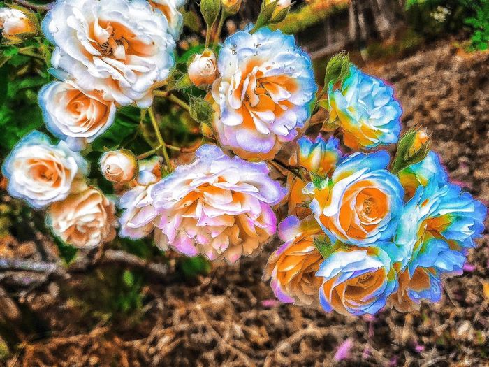 Color Palette A beatiful flower pic, from Edisto Memorial Gardens,Orangeburg S.C./( First Adobe PhotoShop Edit). OVER FILTERED FLOWERS!!😎 Flowers Beatiful Nature Look-COLORS!!! Love Nature I_REALLYWANT_AN_AWARD Nature_collection Gourgeous View Flower Porn...literally🌸 I_💖EYEEM LIFES GOOD👍 ridge crest same as edisto park The Great Outdoors - 2017 EyeEm Awards