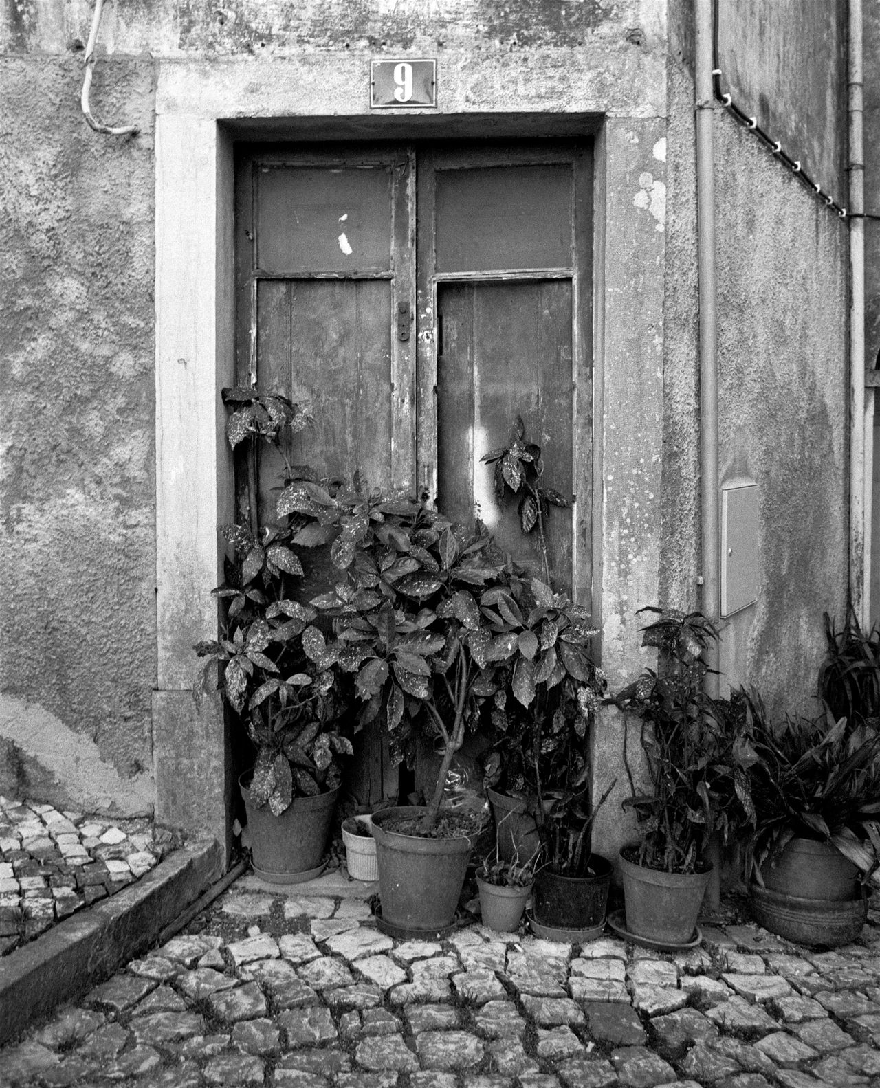 Analogue Analogue Photography Architecture Black And White Blackandwhite Building Exterior Built Structure Close-up Day Door Doors Film Film Photography House Leaf No People Outdoors Plant Plants Portugal