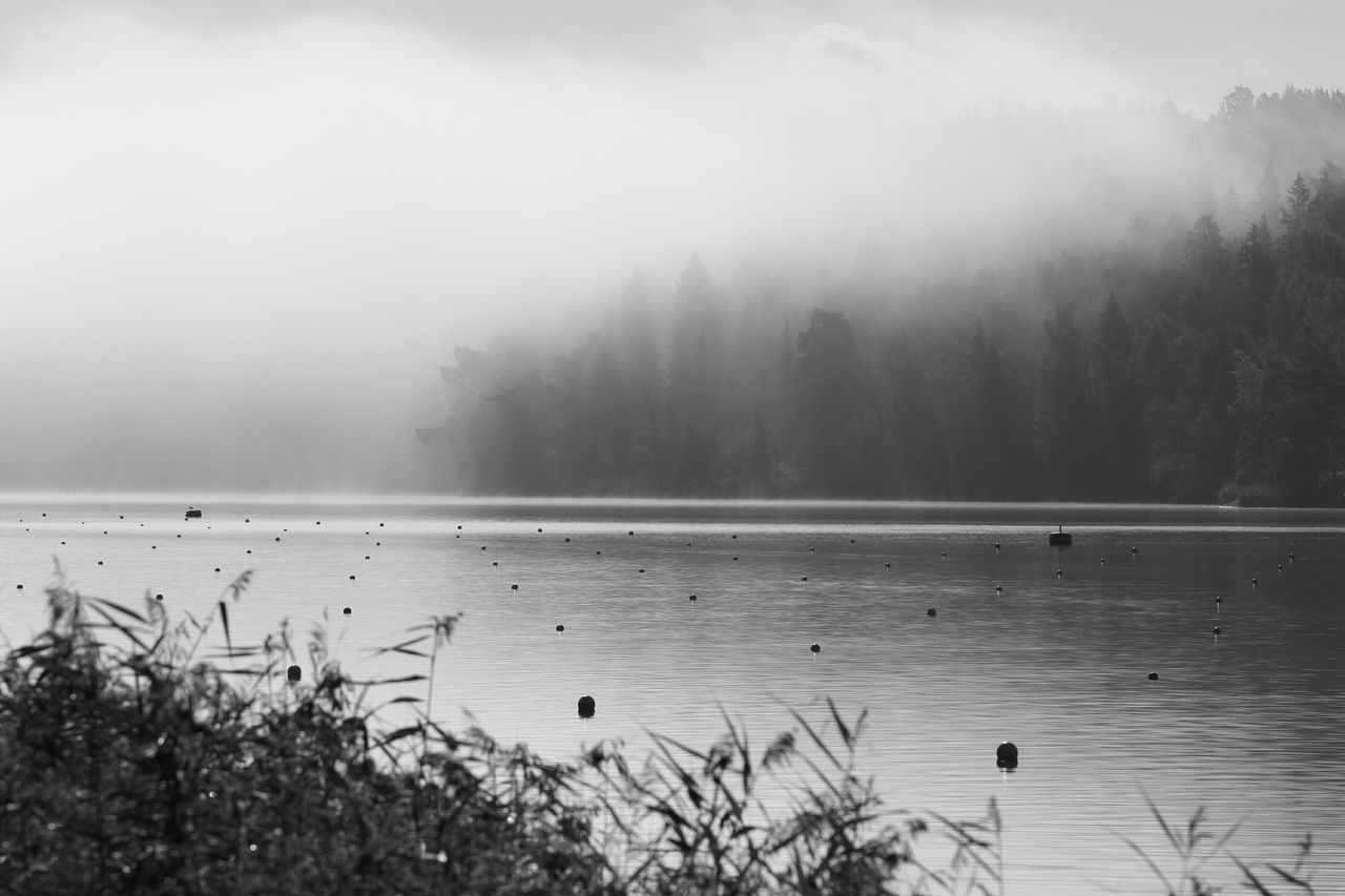 Water Reflections Fog Black And White Creative Light And Shadow End Of Summer Edge Of The World Human Vs Nature Nature EyeEm Nature Lover Silhouette