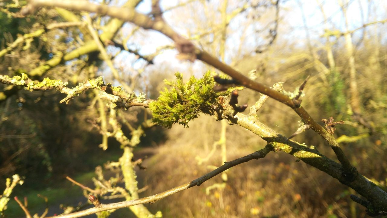 Beauty In Nature Branch Close-up Day Focus On Foreground Fragility Freshness Growth Nature No People Outdoors Plant Tree Twig Teddington Lock
