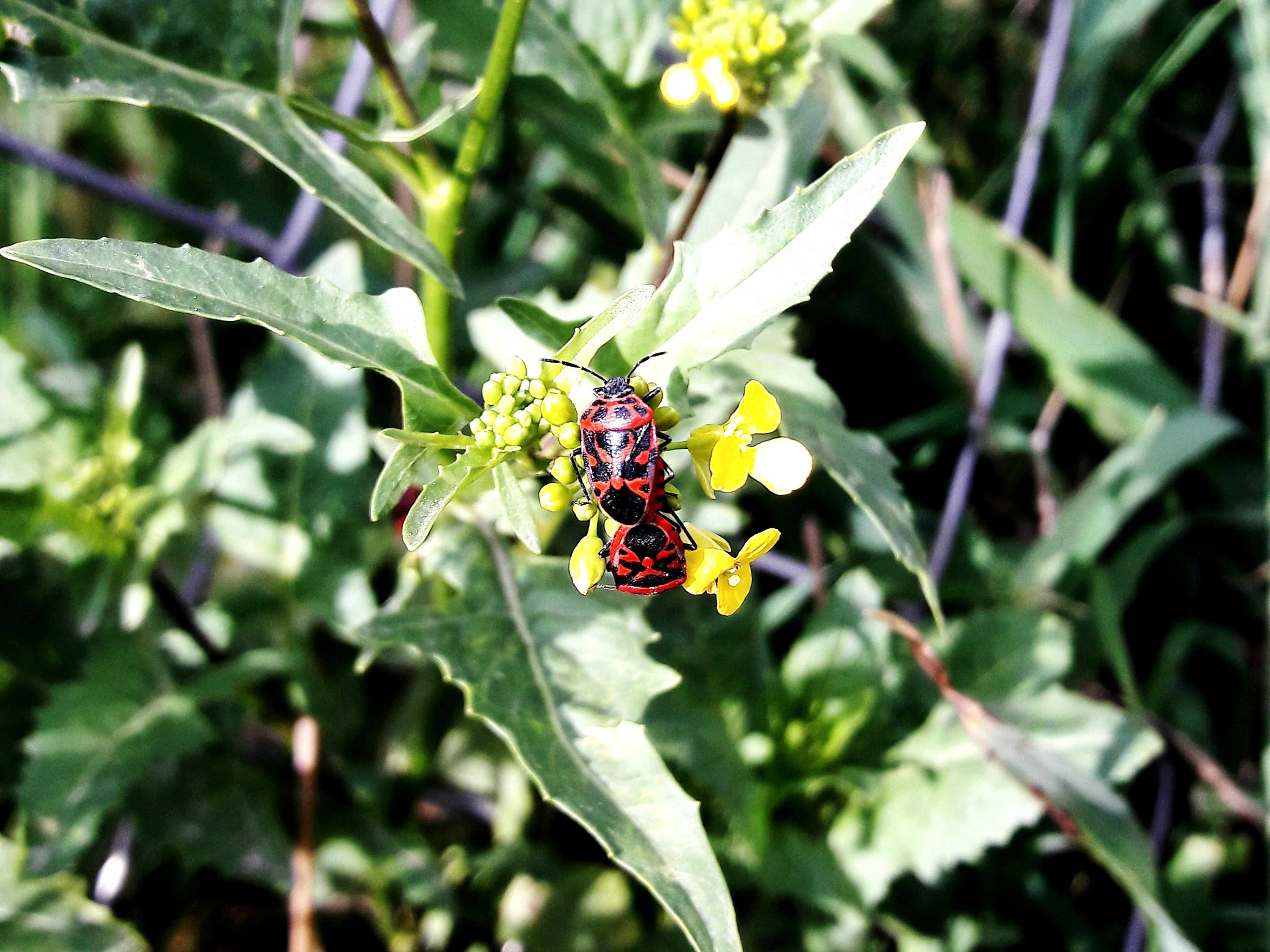 insect, animals in the wild, animal themes, one animal, leaf, plant, green color, nature, outdoors, day, no people, animal wildlife, growth, ladybug, close-up, beauty in nature, grass, fragility