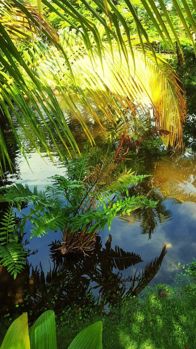 Where the wild things might be Reflection Water Pond Palm Leaf
